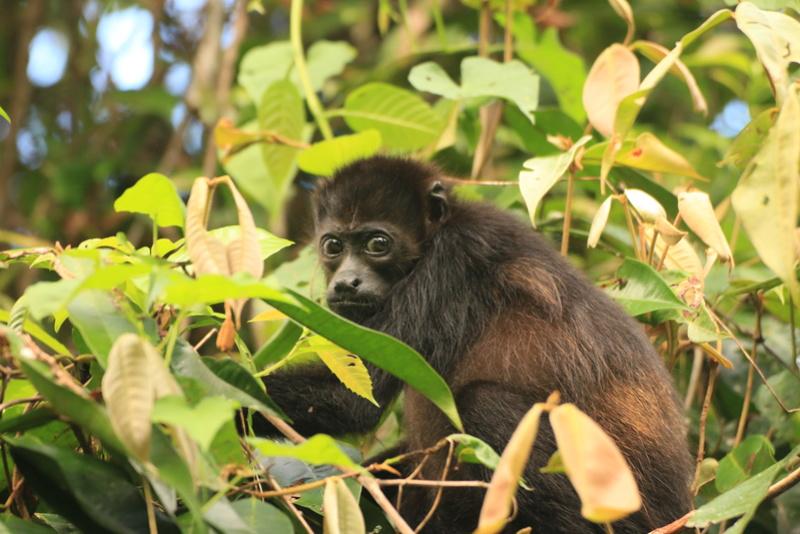 Nature au Costa Rica Img_6518