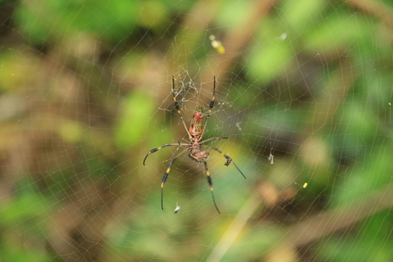 Nature au Costa Rica Img_6519