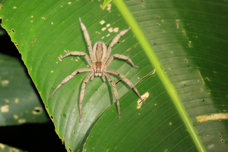 Nature au Costa Rica Img_6615