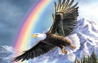 La leçon de l'aigle Aigle-10