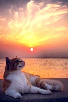 Le temple des chats Chatso10