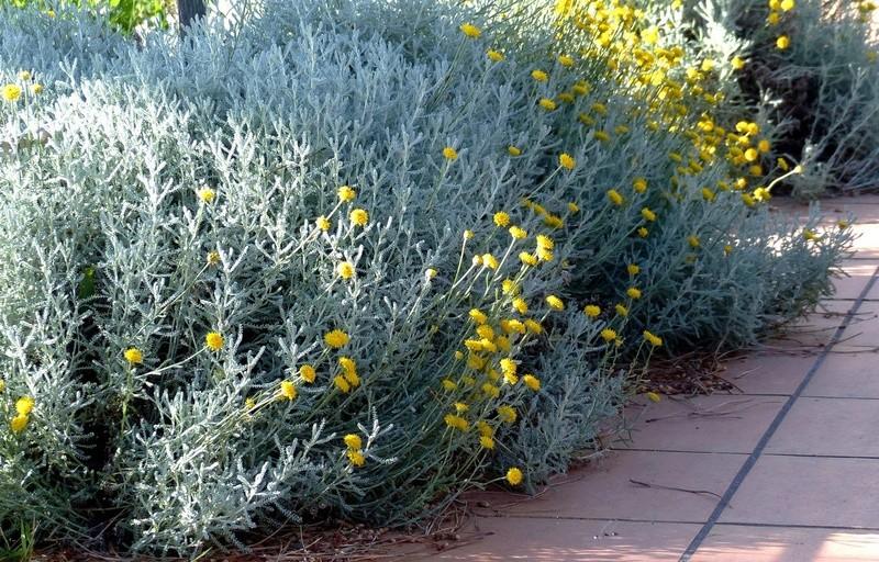 ces quelques fleurs de nos jardins - Page 3 P1140610