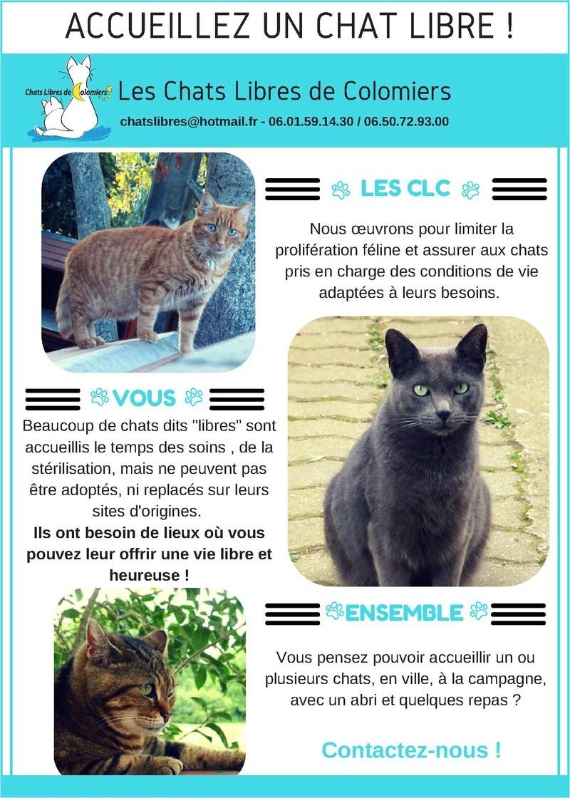 """Accueillez un chat """"sauvage"""" dans votre jardin Accuei14"""