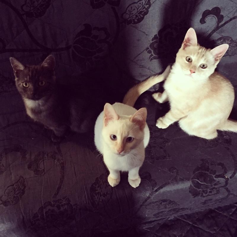 Nadiya (adoptée), Nicki (adoptée), Nickelback, Nirvana (adopté) File2-10