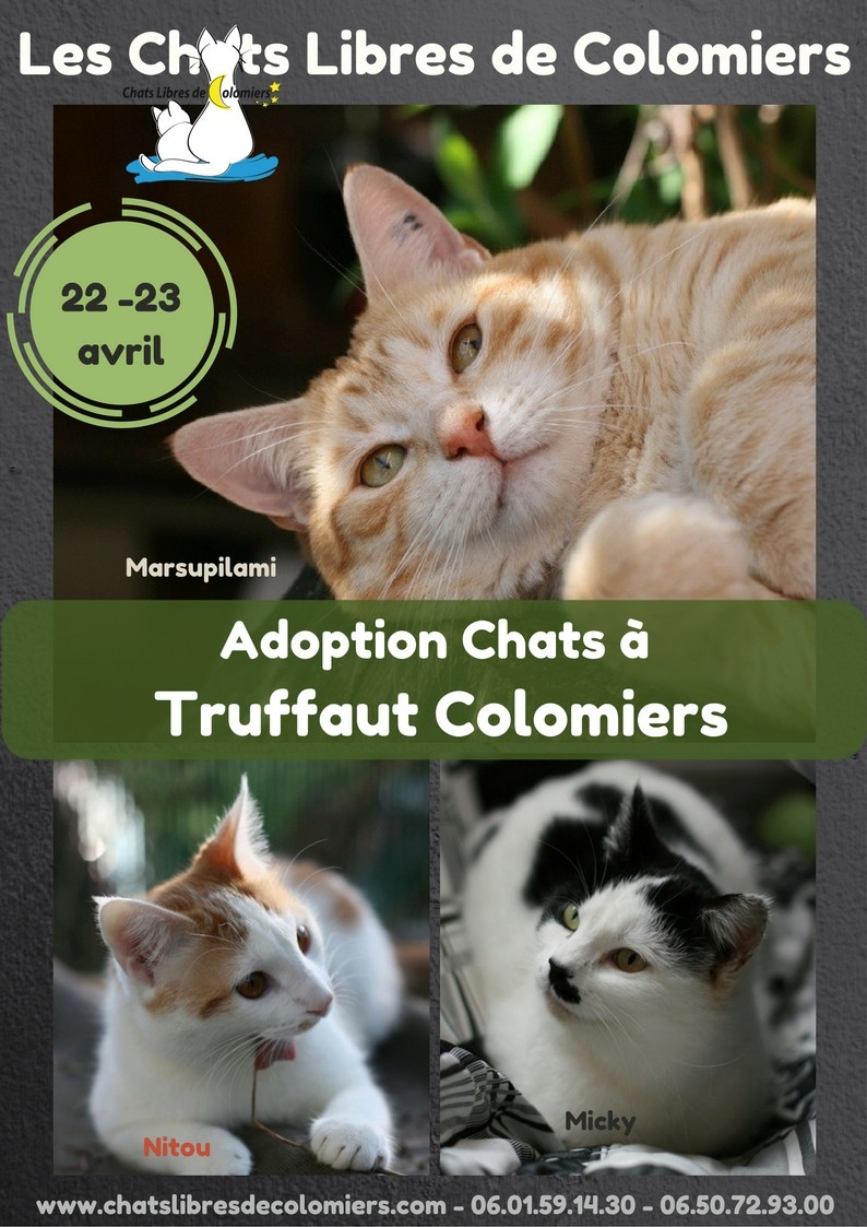 Week-end adoptions à Truffaut le 22 et 23 Avril ! Ja_mai10