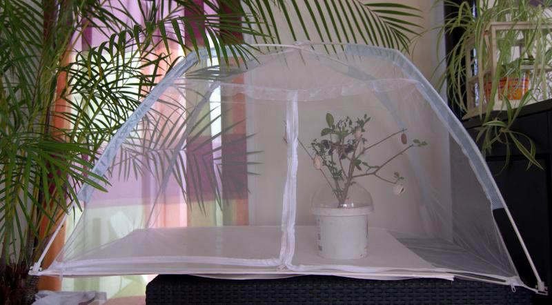 Tentes en moustiquaire pour nos papillons Img_8311