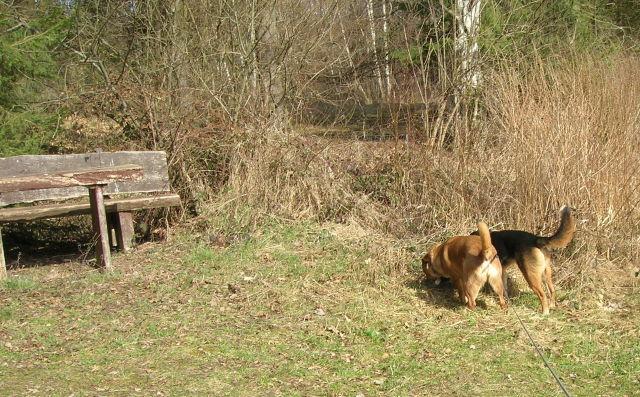 Bildertagebuch - Angel II, tolle Schäferhündin möchte endlich ein Zuhause haben...VERMITTELT! Hunder16