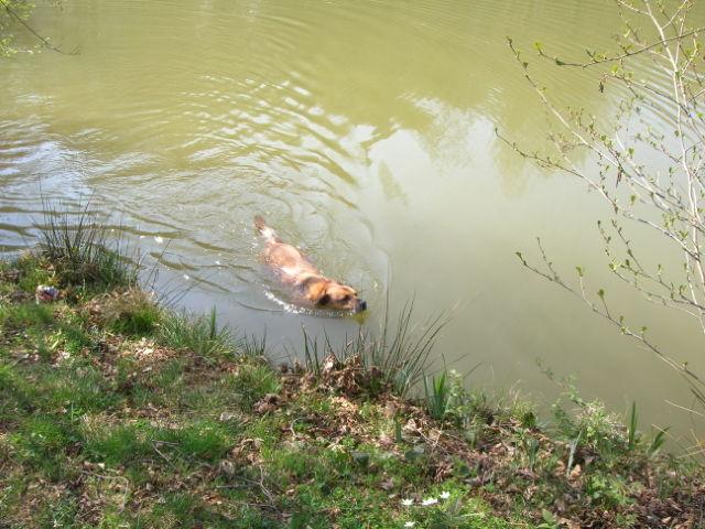 Ein kleiner Italiener im Hunsrück: PABLO Hunder27