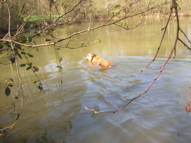 Ein kleiner Italiener im Hunsrück: PABLO Hunder29
