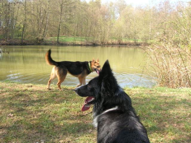 Ein kleiner Italiener im Hunsrück: PABLO Hunder33