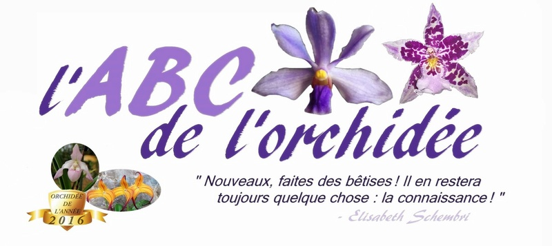 Forum l'ABC de l'orchidée