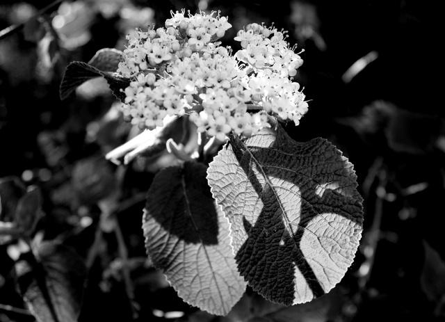 Nos amies les fleurs (Symbolisme) - Page 11 Bisse_12