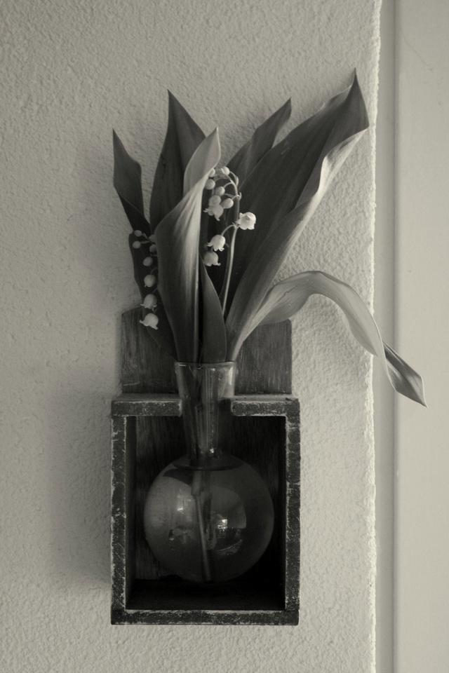 Nos amies les fleurs (Symbolisme) - Page 12 Fleurs13
