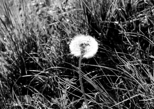 Nos amies les fleurs (Symbolisme) - Page 10 Mouton10