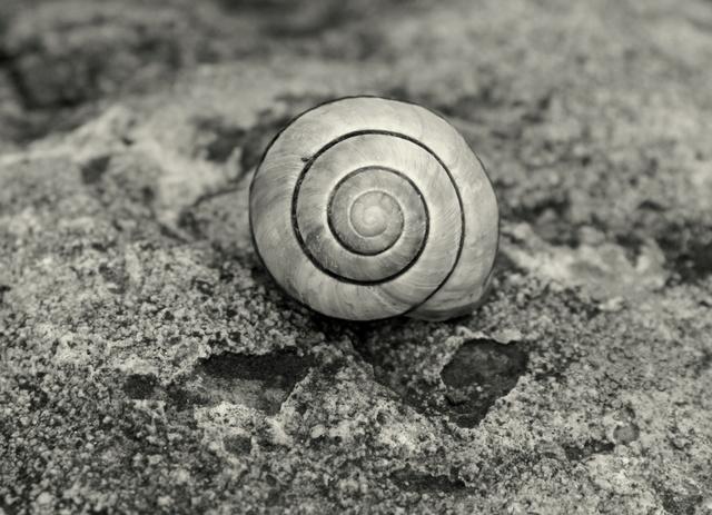 La spirale, mouvement de vie. - Page 10 Pluie_11