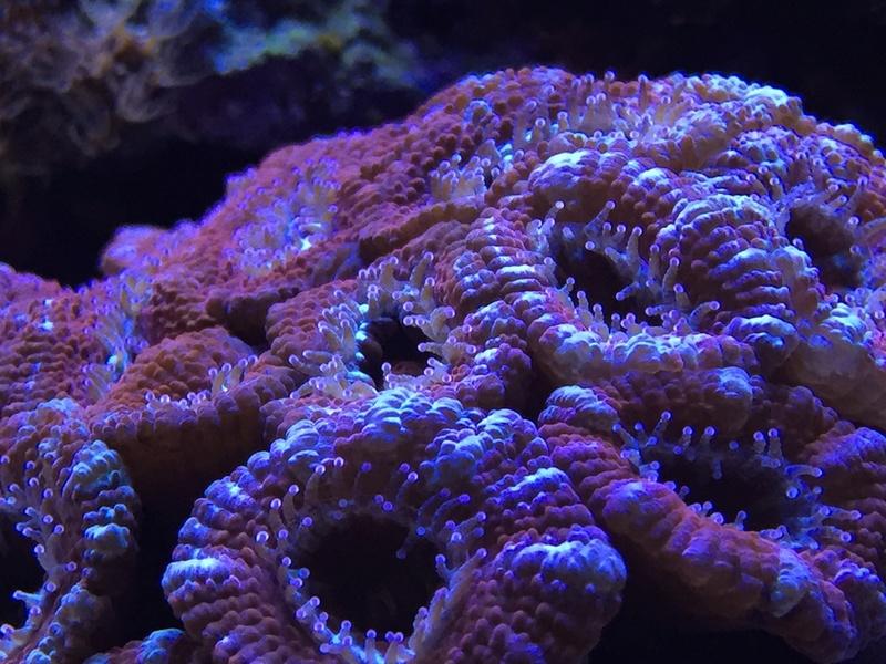 Red sea 170 sebbordeaux Img_9810
