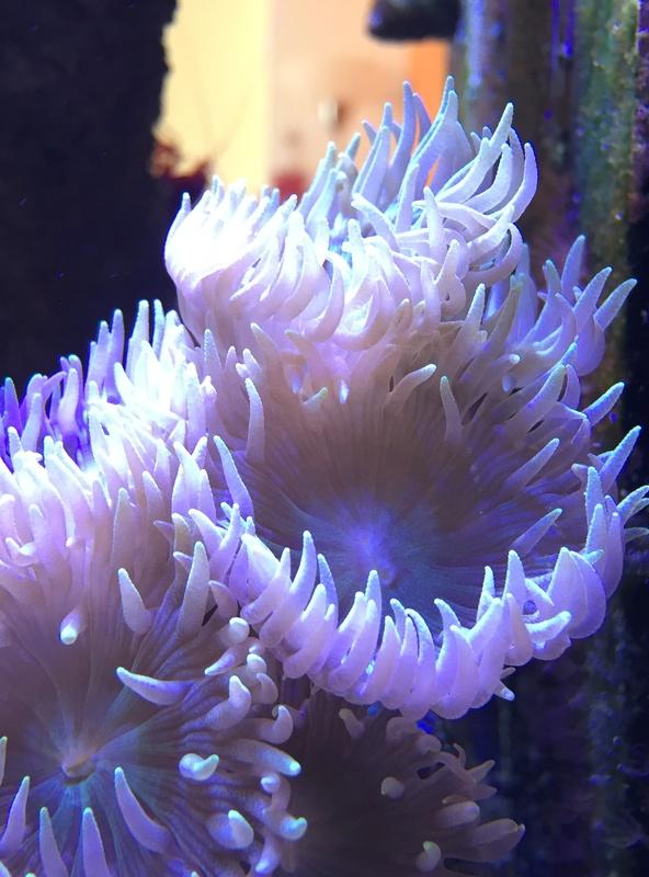 Red sea 170 sebbordeaux Img_9811