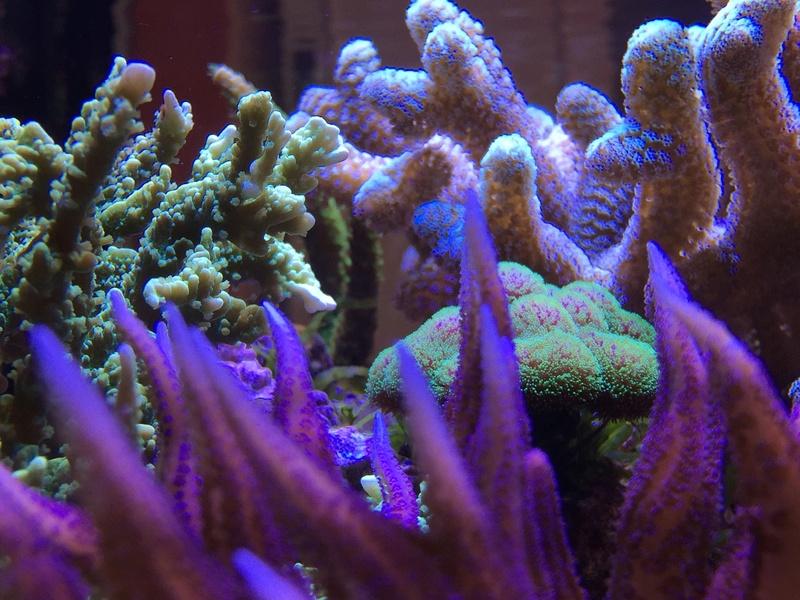 Red sea 170 sebbordeaux Img_9816