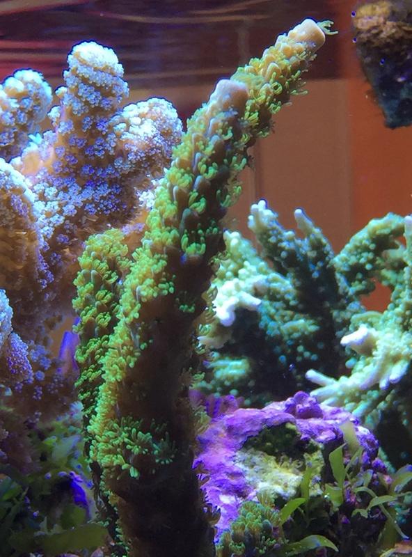 Red sea 170 sebbordeaux Img_9817