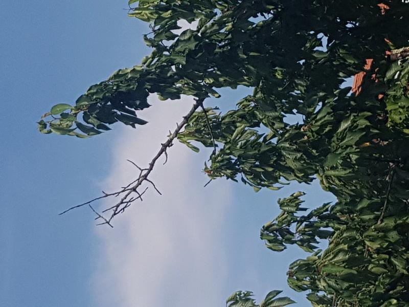 Terrarium pour morelia viridis aru juvénile  - Page 2 20170611