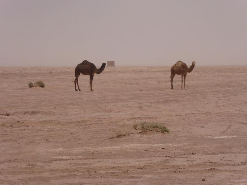 Maroc en Mai ? - Page 4 P1000116