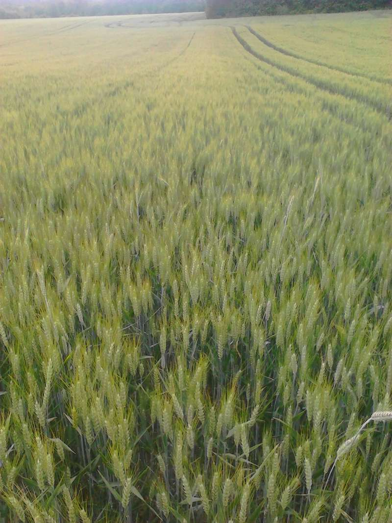 suivi des blés tendre 2017 - Page 4 Img_2012