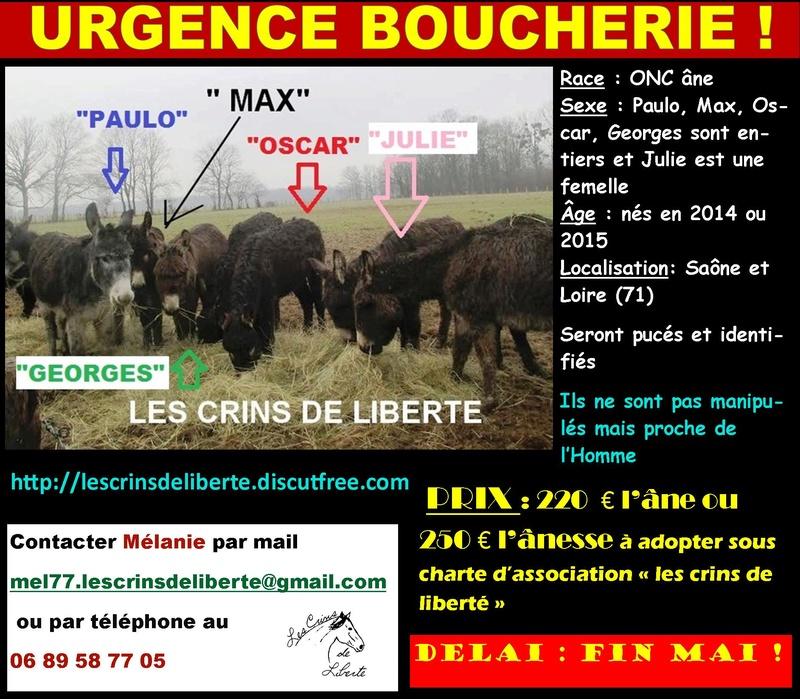 (Dept 71) Fonzy dumarais - ONC âne - Réservé par Christel et Mireille (oct 2017) Paulo_11