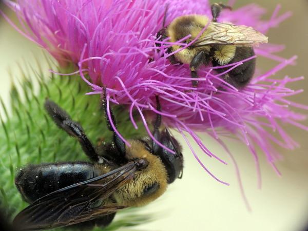 Mason bees - Page 3 Img_7010