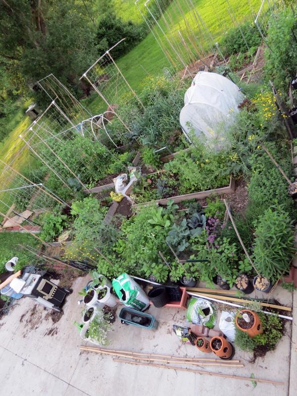 Mid-Atl - June 2017 - How's Your Garden Doing? Img_8912