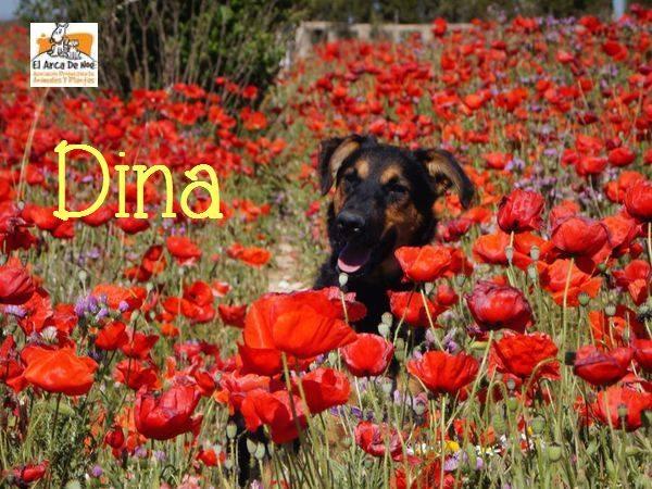 DINA - NOIRE & FEU - ES  18447112