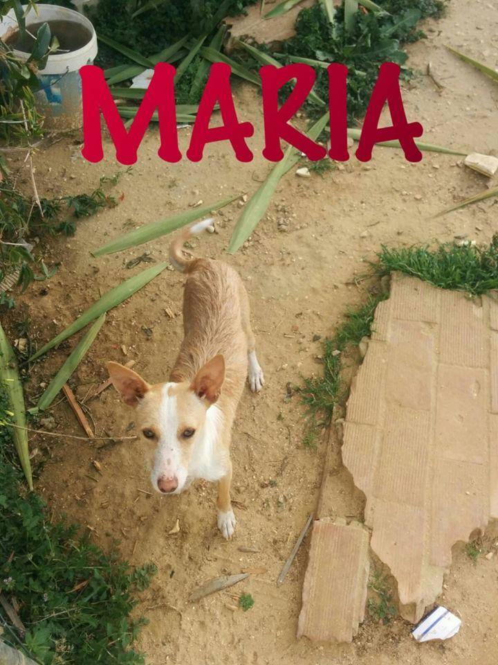 MARIA - PODENCA - ES 18486110