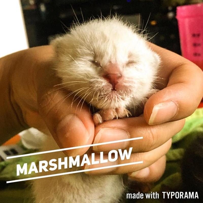 MARSHMALLOW - EN FA DANS LE 93 19369610