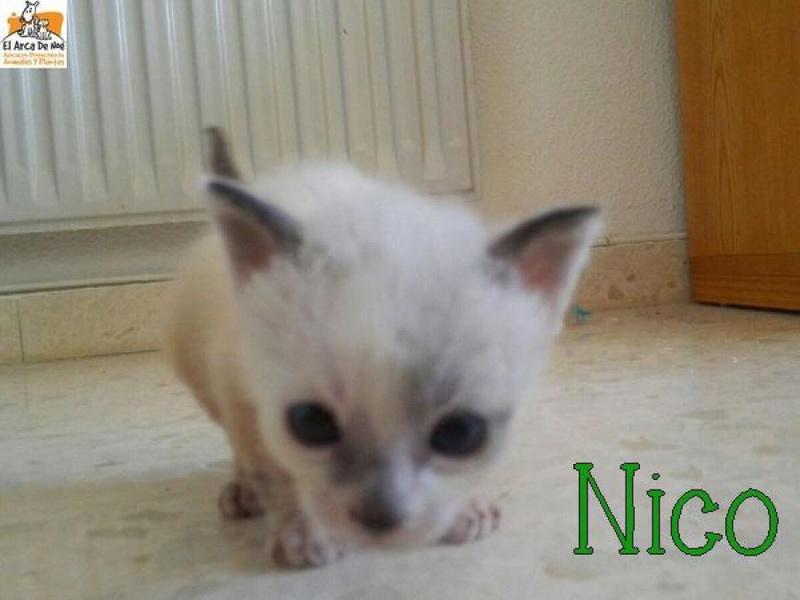 [A RESERVER] NICO - ES  8189f110