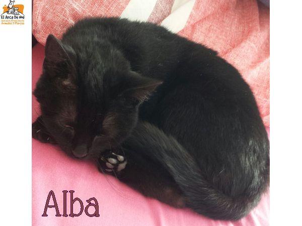 ALBA - NOIRE - ES  Alba_c10