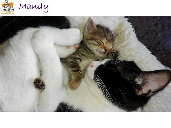 MANDY - TIGREE - FEMELLE - ES  Foto_310