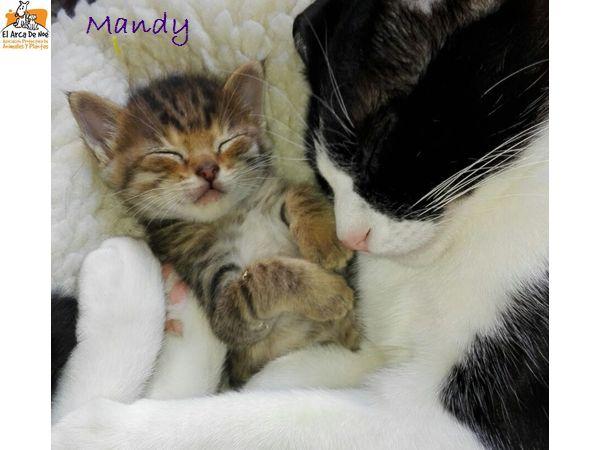 MANDY - TIGREE - FEMELLE - ES  Mandy10