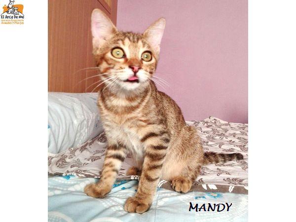 MANDY - TIGREE - FEMELLE - ES  Mandy_10