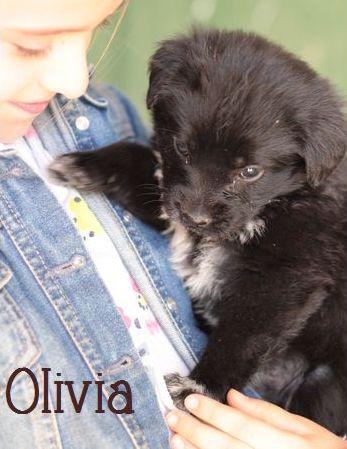 OLIVIA - NOIRE avec marques blanches - ES (Sole) P1703310