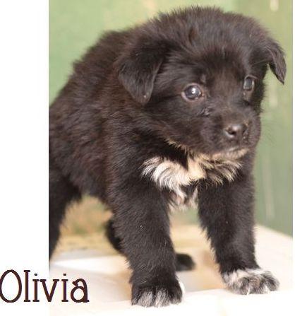 OLIVIA - NOIRE avec marques blanches - ES (Sole) P1703312