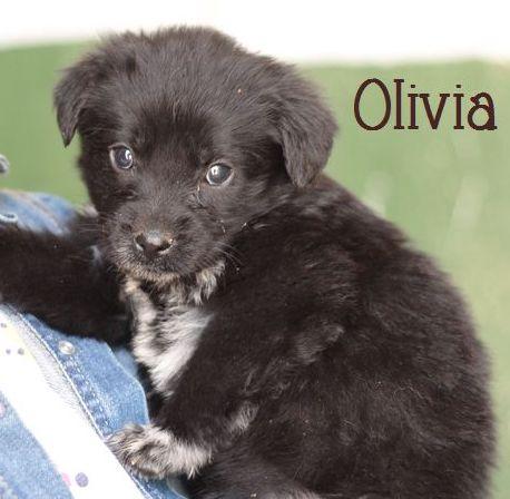 OLIVIA - NOIRE avec marques blanches - ES (Sole) P1703314