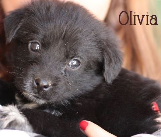 OLIVIA - NOIRE avec marques blanches - ES (Sole) P1703315