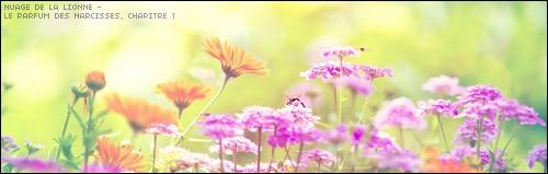Le Parfum des Narcisses Nature10
