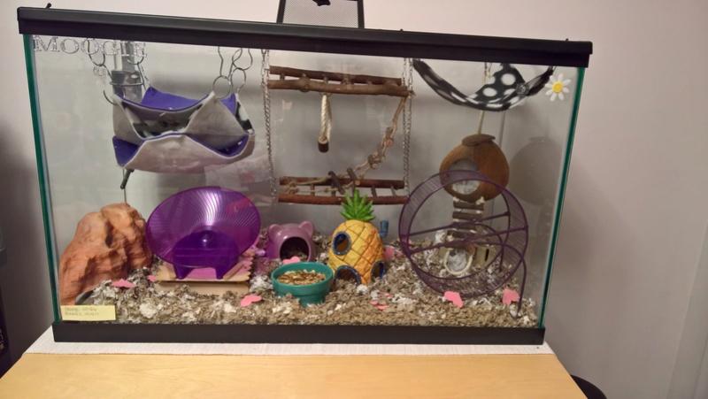 Is this cage setup okay? Wp_20234