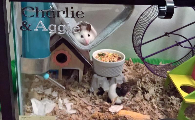 Random mouse pics Wp_20317