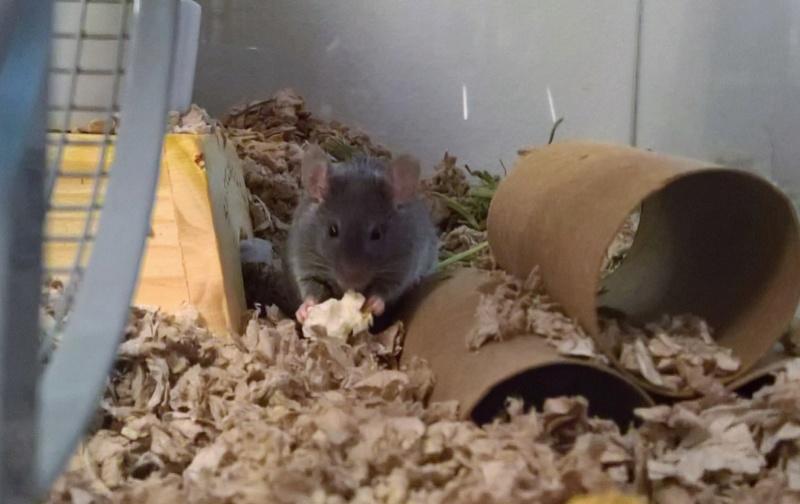 Random mouse pics Wp_20321