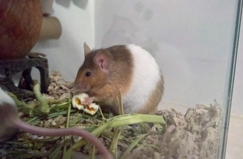 Random mouse pics Wp_20322
