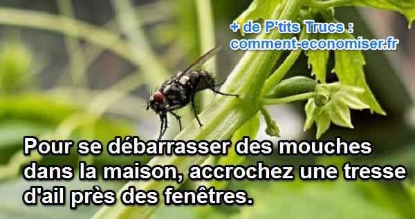 Comment se débarasser efficacement des mouches dans la maison  A10