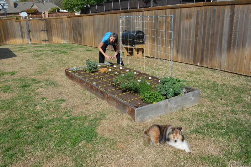 North Texas - Square Foot Garden Sqftga10