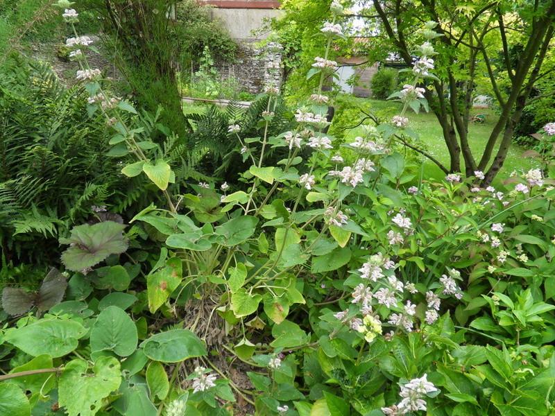 sauriez-vous le nom de cette plante? Sdc17516