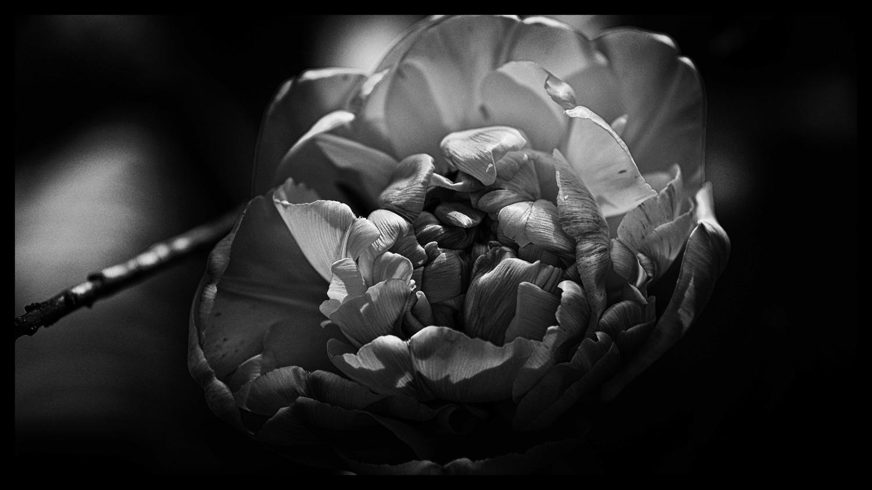 La Tulipe Noire 20170410